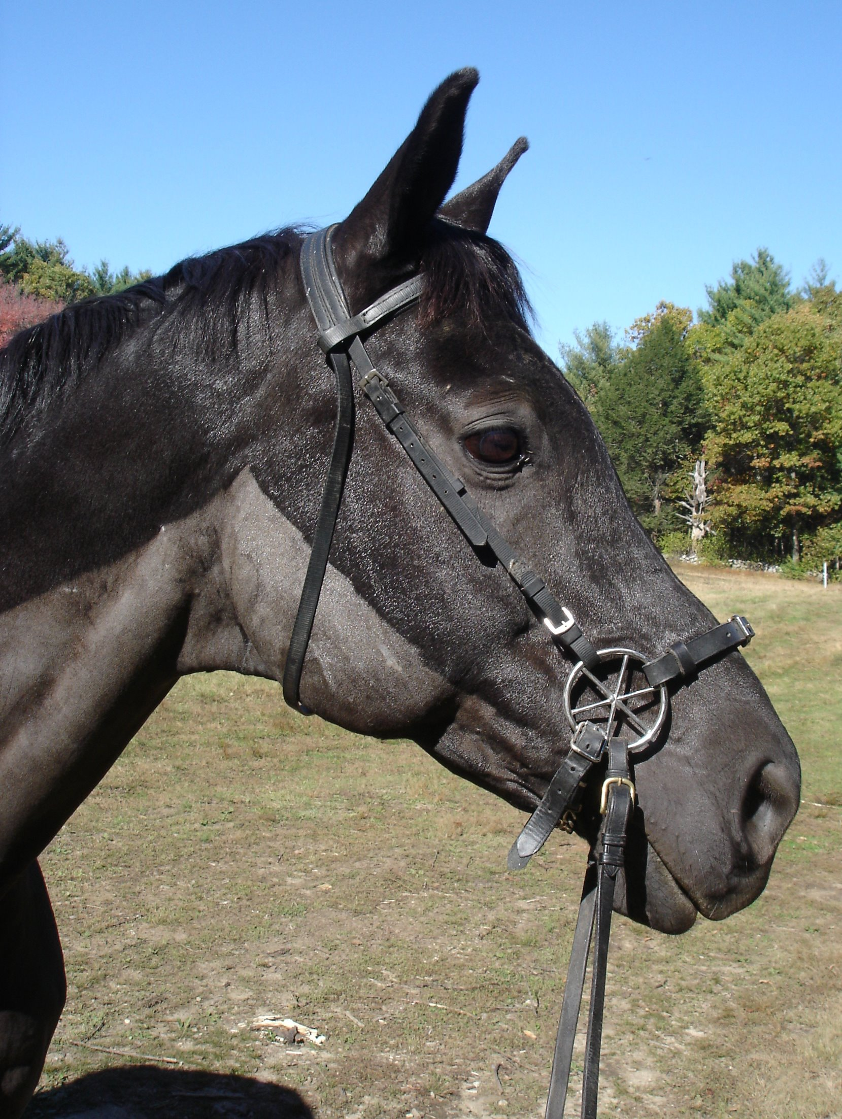 Bridle - Wikipedia
