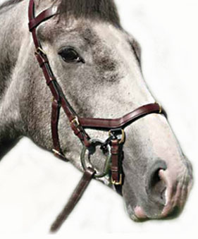 Are Micklem Bridles Allowed In The Show Ring