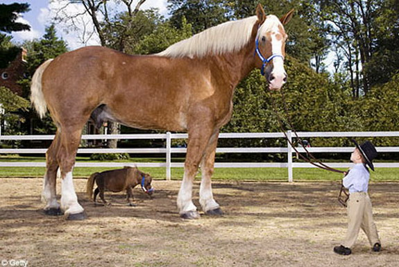 The smallest horse in the world ever - photo#42