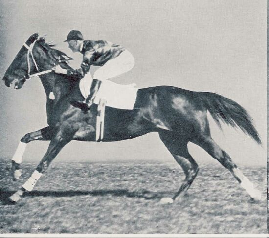 http://equineink.files.wordpress.com/2008/06/pharlap.jpg