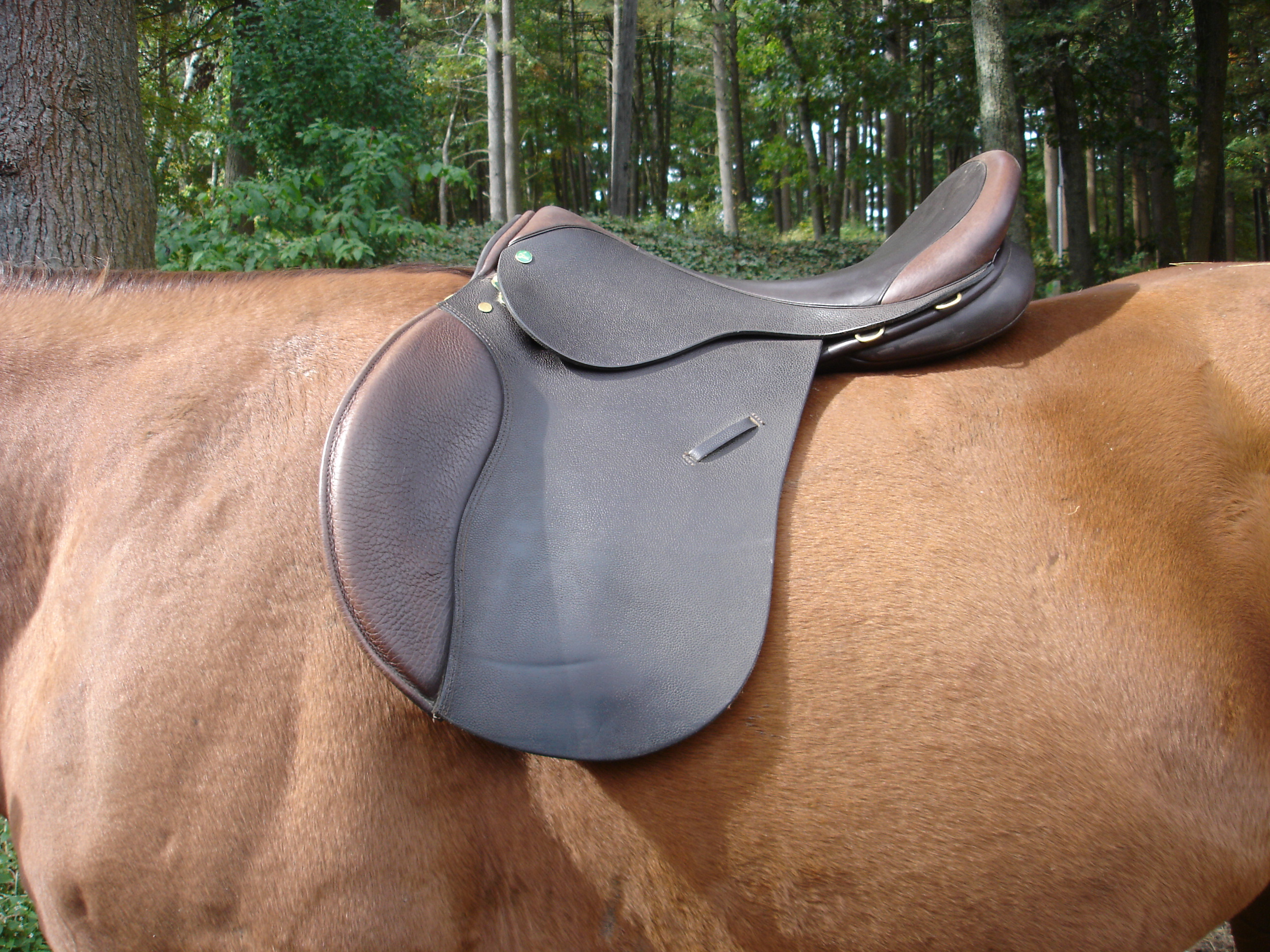 The Importance of Saddle Fit – EQUINE Ink