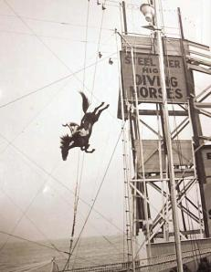 The Diving Horses of Atlantic City's Steel Pier jumped 60 down into a special tank.