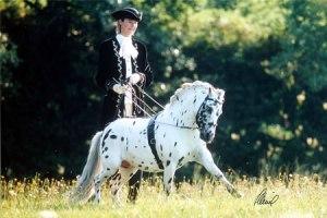 Long lining is not just for training big horses -- it's how Lancelot, the mini appaloosa struts his stuff (photo by Christiane Slawick).