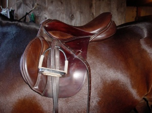 This saddle is in the correct place on the horse's back. You can see how the position of the saddle ensures that the rider's weight will be distributed by the panels.