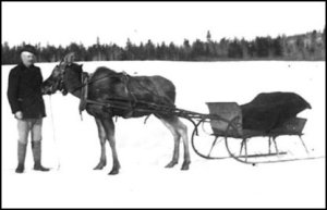 Moose pulling a sleigh.