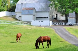 The stables at Graceland.