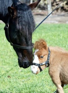 Koda is so much smaller than this average sized horse that it's hard to believe they are the same species.