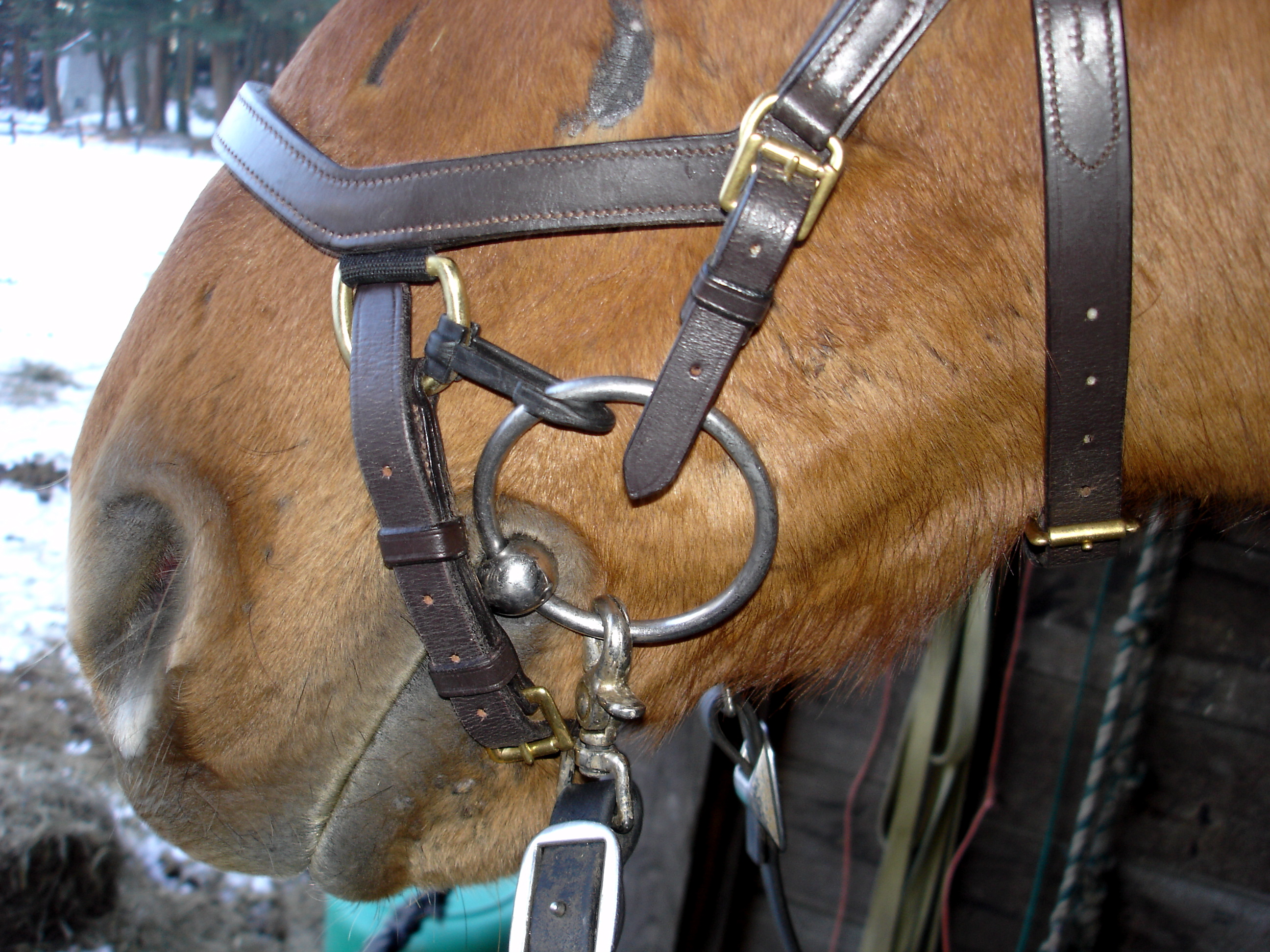 Plastic bridle member before and after