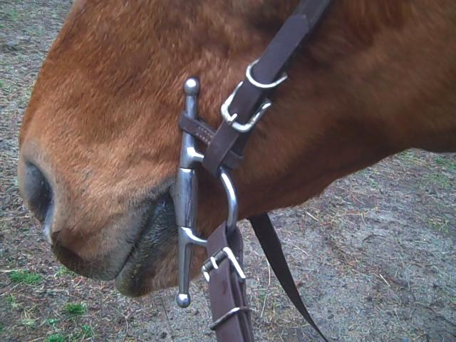 Kincade Fulmer Bit Keepers PairHorses /& Ponies