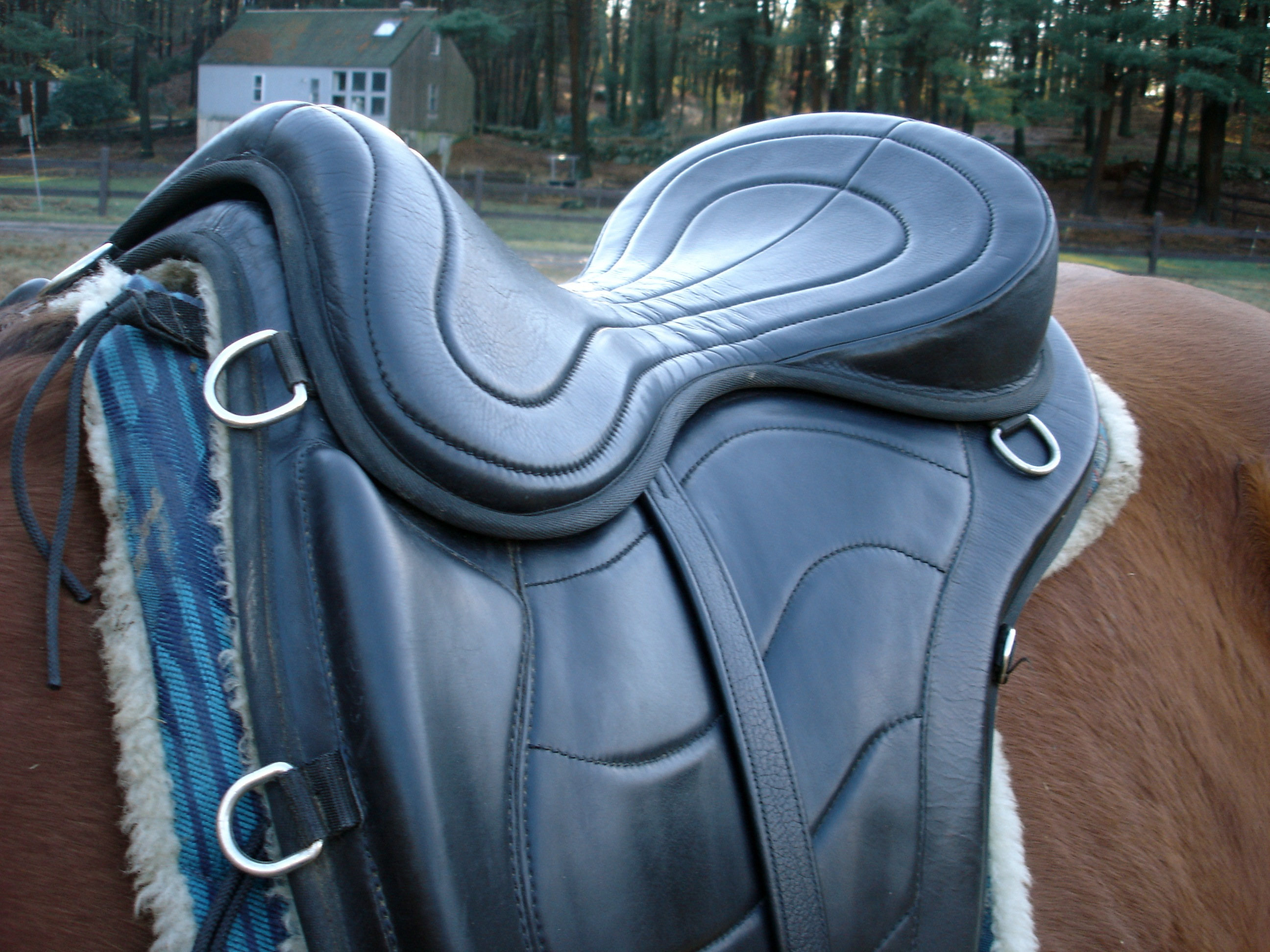 torsion treeless saddle. freeform saddle torsion treeless