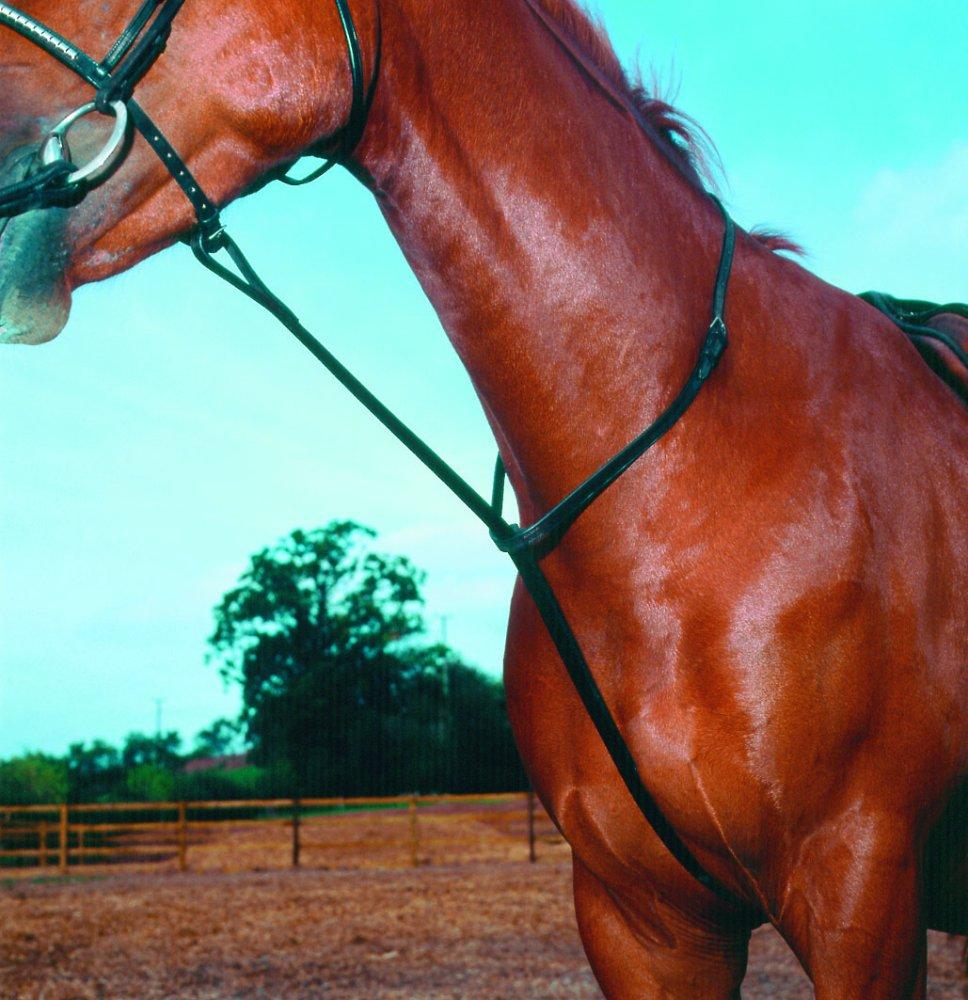 martingale horse