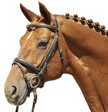 Bridle with a flash noseband