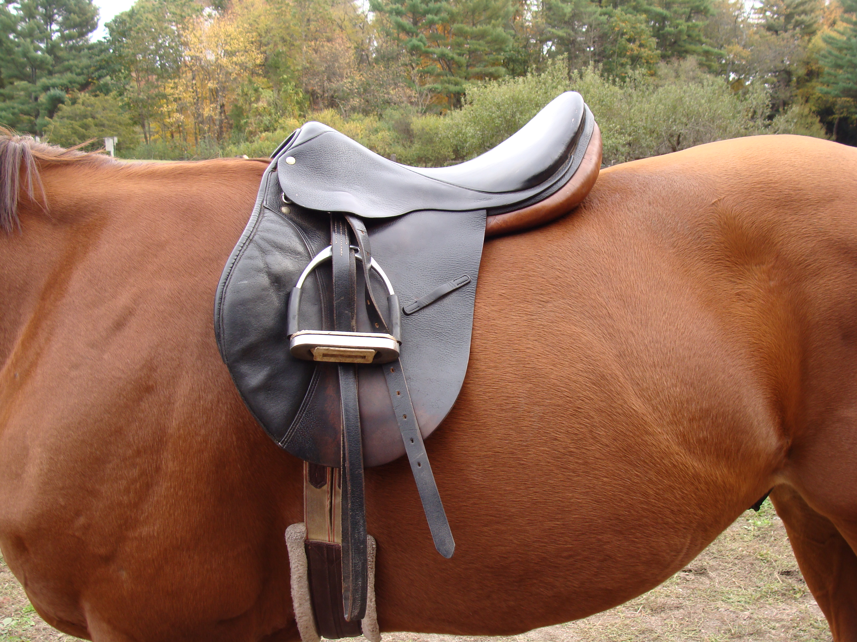 Is your horse an off-the-shelf fit? – EQUINE Ink Saddle