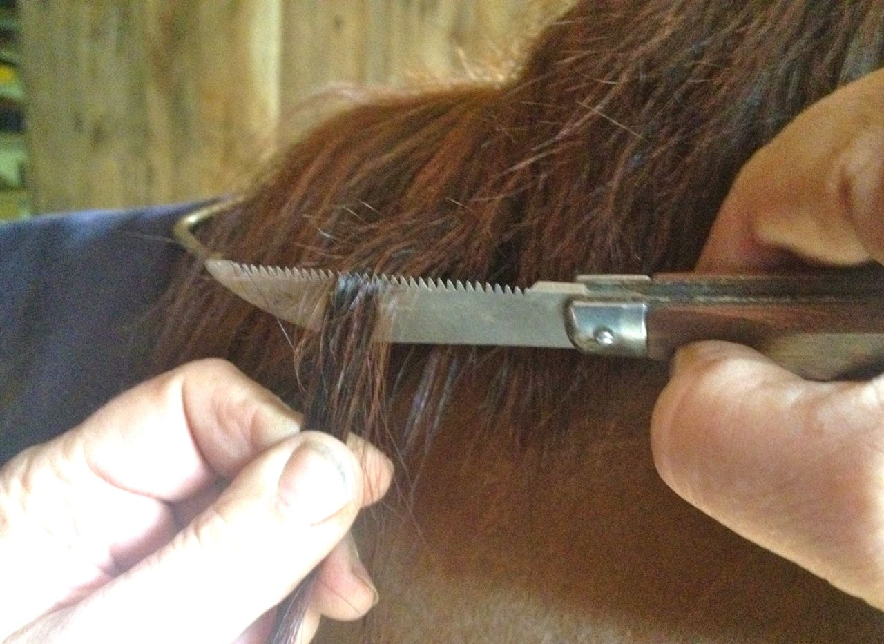 Your Pulling Horse's Mane