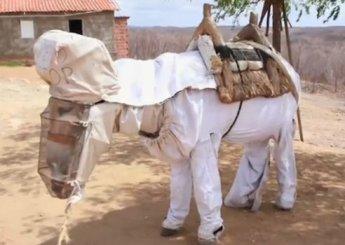 Beekeeper's Donkey