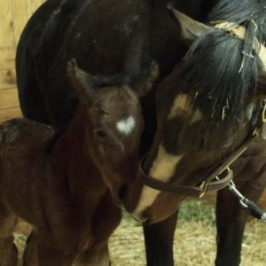 Rachel Alexandra's Filly