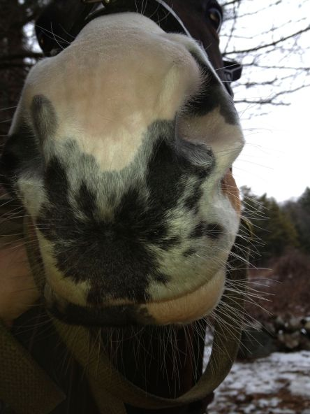 Sheldon has such unusual coloring on his nose. It's almost like a Rorschach test! What does it look like to you?