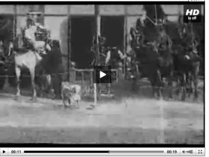 These fire horses are ready to go in just 15 seconds. The video was shot in 1903. The video won't embed so please click on the image to watch it.