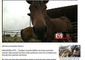 Blind horse survives tornado