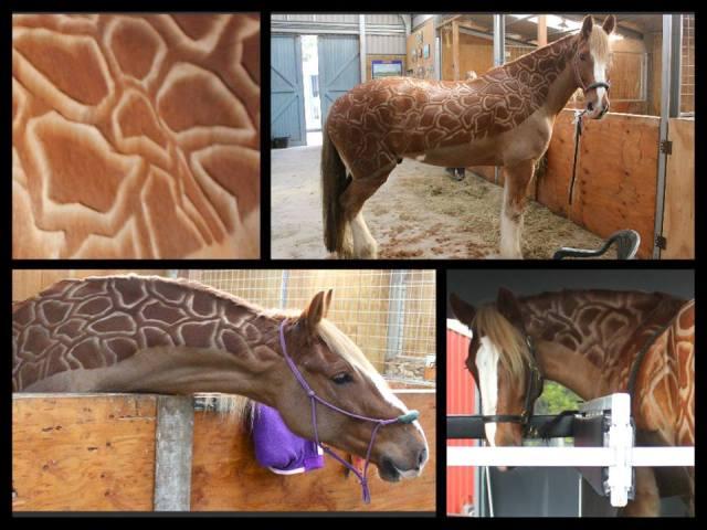 Giraffe Clip