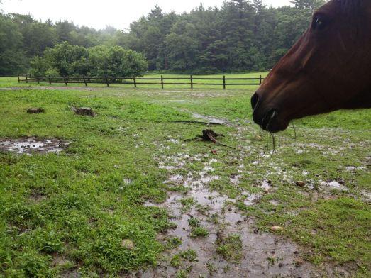 Pasture under water