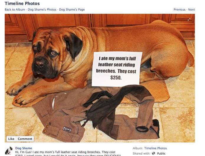 Dog shame