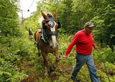 horse power pulls fiber optic cables