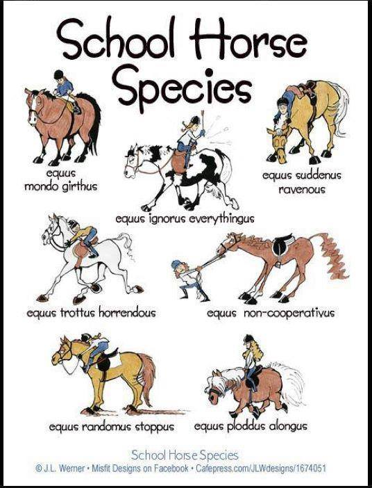If you spent as many years as I did riding school horses, I'm sure you will  recognize a few of these.