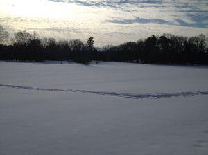 snow trcks