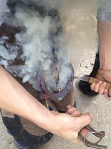 For Zelda, my farrier uses hot shoeing which allows the