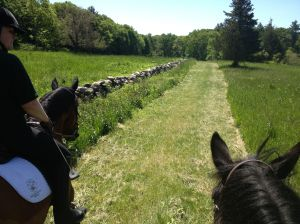 Heading out along the mown path. This pace took us through some beautiful meadows!