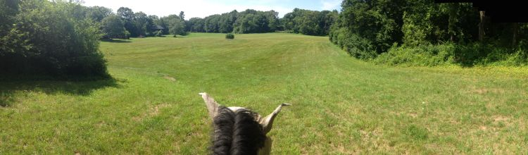 Some days the possibilities seem as endless as a huge galloping field. Yesterday the humidity was low, the breeze kept the bugs at bay and there was a