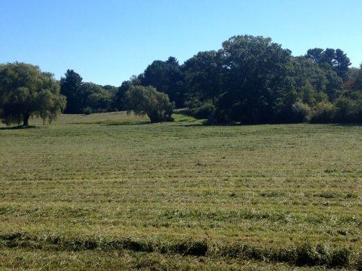 fresh mown hay