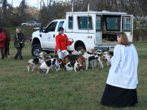 Blessing of the hounds