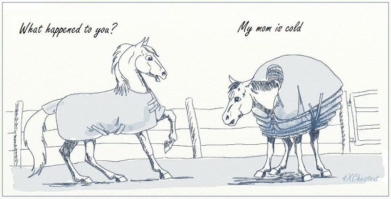 Do You Blanket Your Horse In The Winter Equine Ink