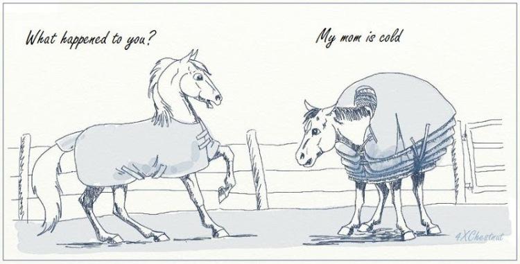 Horse blanketing