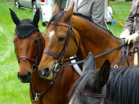 Staff horses