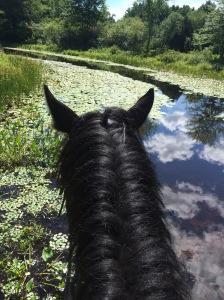 Zelda Great Brook