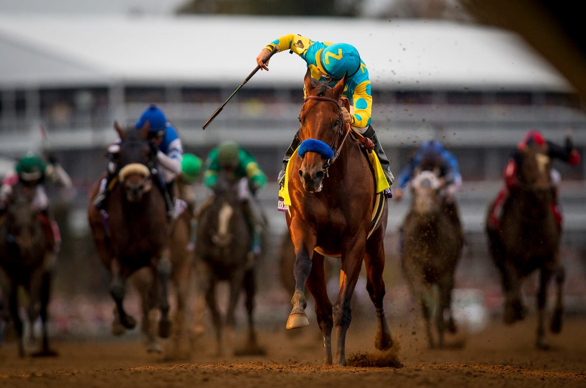American Pharoah Wins The Breeders Cup Classic Equine Ink