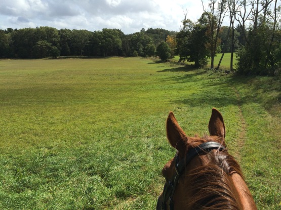 Through the ears of your horse
