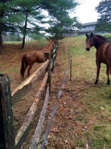 Offset fencing