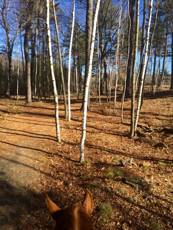 Hard to believe that I'd be riding the trails and have this view on the first week of February. I've always loved the silver birches.