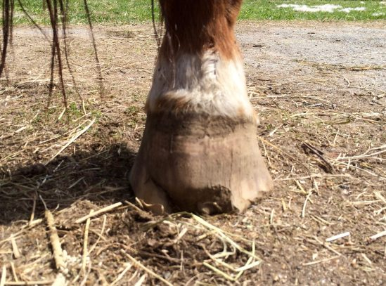 Freedom's broken hoof.