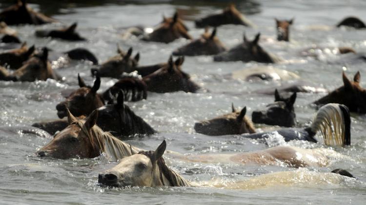 pony swim3