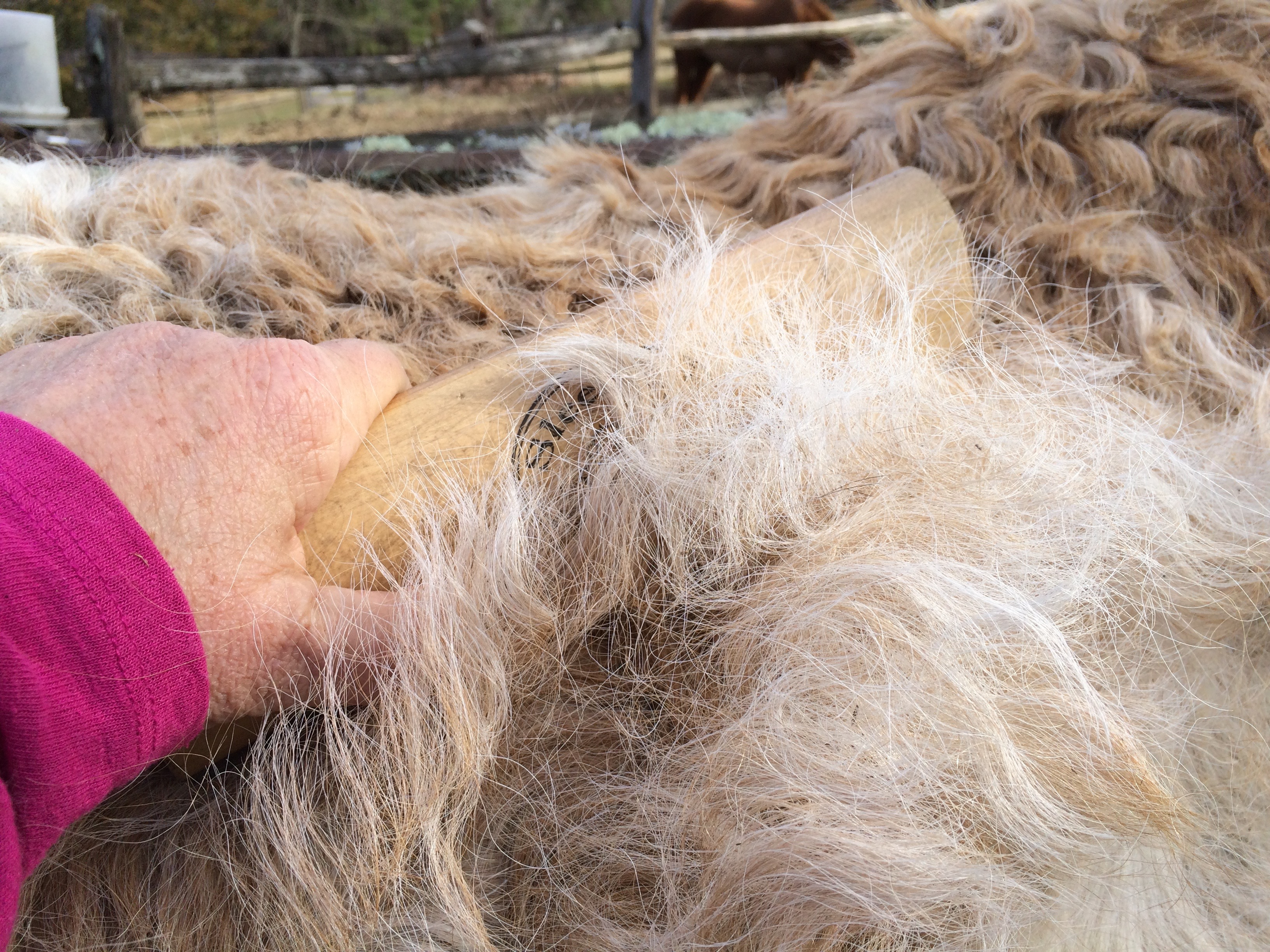 Furminator Long Hair Cat Damage