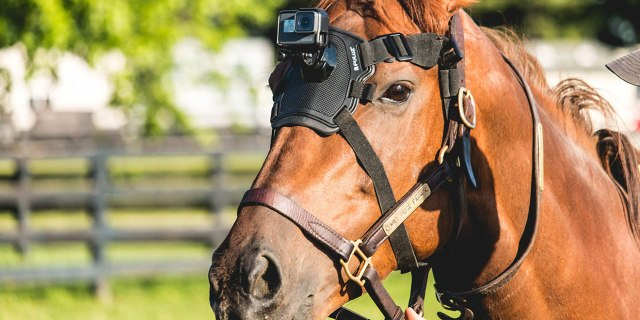 GoPro for horse head
