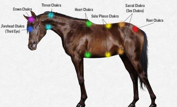 Horse chakra points