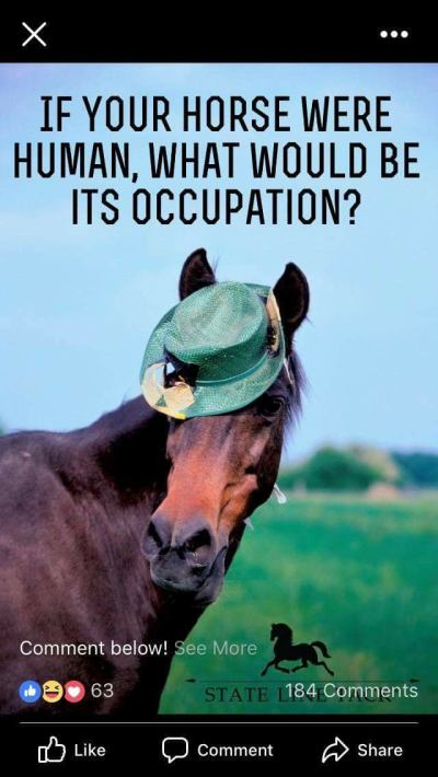 What job would your horse have if he was human?