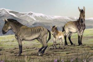 Pleistocene Era horse