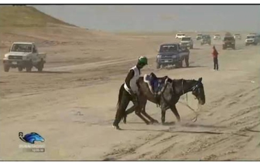 Horse breaks down in race